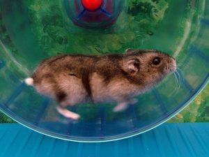 Läufst Du auch durch Dein tägliches Hamsterrad?